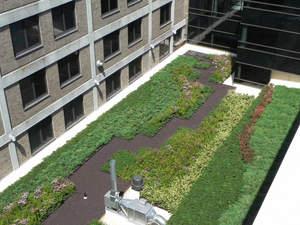Riverside_Med_Center_green_roof_web